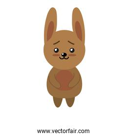 cute rabbit wild animal with face expression