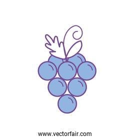 delicious and healthy grape fruit