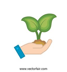 hand with nice plants with ground to natural ecology