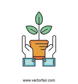 ecology plant with flowerpot and leaves with hands