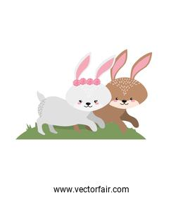 cute rabbit animal couple together