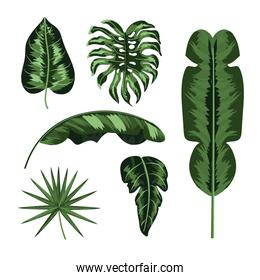 set natural leaves plants style