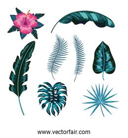 set natural flower and tropical leaves