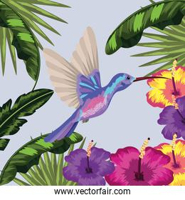 hummingbird with flower and leaves plants background