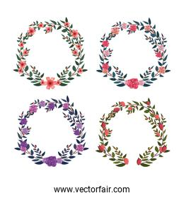 set flowers and roses with circle branches leaves