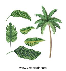 set tropical palm tree and exotic leaves