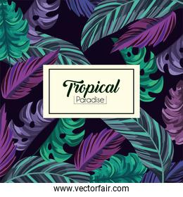 tropical label and exotic leaves background