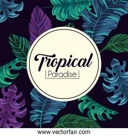 tropical label and exotic leaves plants background