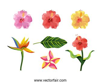 set tropical flowers plants and exotic leaf