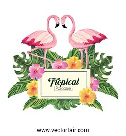 label with flamingos animals and tropical leaves