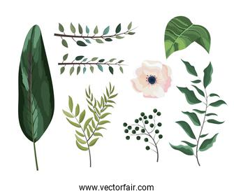 set exotic branches leaves plants and flower