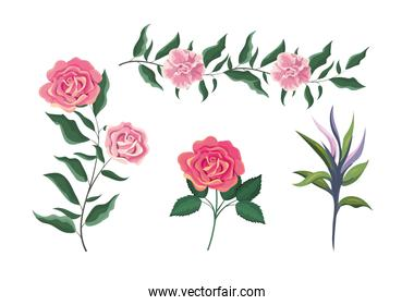 set exotic roses plants with leaves
