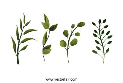 set exotic branches leaves plant