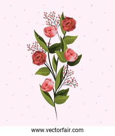 beauty flowers plants with branches leaves