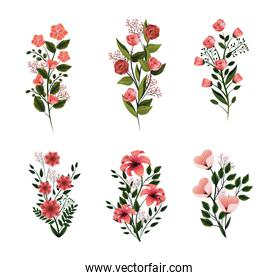 set nature flowers plants with petals and leaves