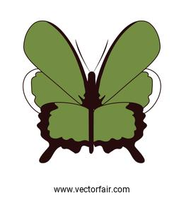 beauty butterfly insect animal with wings