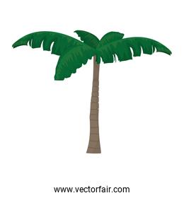 nature palm tree with leaves design
