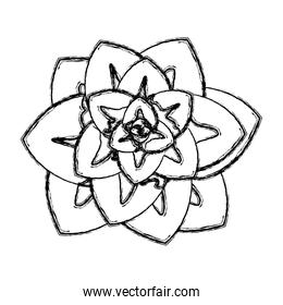 grunge cute flower with beautiful nature petals