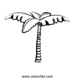 grunge nature palm tree with leaves design