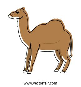 moved color cute nature dromedary desert animal