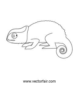 dotted shape nature chameleon animal with exotic skin