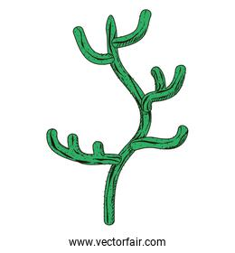 ecology and nature desert cactus plant