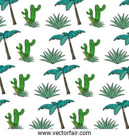 cactus plant with avaceas and palm tree background