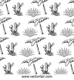 line cactus plant with avaceas and palm tree background