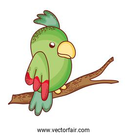 beauty green  parrot bird animal in the branch