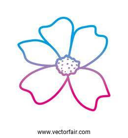 degraded line natural beautiful flower with petals design