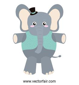 baby elephant animal with vest and hat