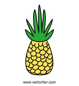 line color delicious tropical pineapple organic fruit