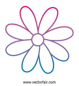 degraded line beautiful flower with nature petals design