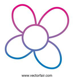 degraded line spring beautiful flower with cute petals