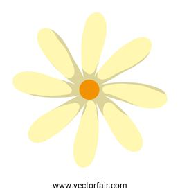spring beauty flower with petals design