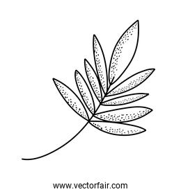 line tropical plant branch with nature leaves