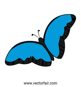 color beauty butterfly insect animal flying