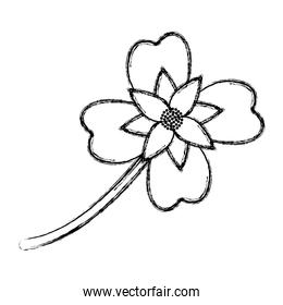 grunge cute natural flower plant with petals