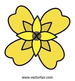 color natural flower with nice petals design