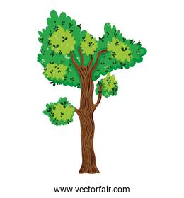 tropical tree with branches leaves design
