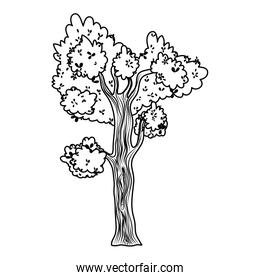 line tropical tree with branches leaves design