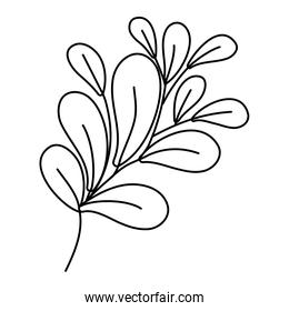 line exotic plant style with branch leaves
