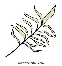 doodle nature branch leaves of exotic plant