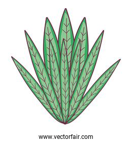 natural plant with exotic leaves design