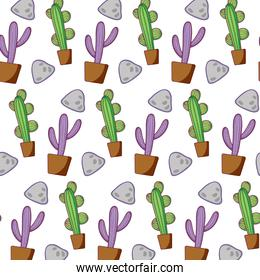 cactus plant inside flowerpot and stones background