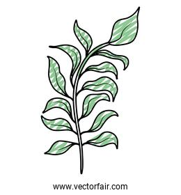 doodle natural branch plant with exotic leaves