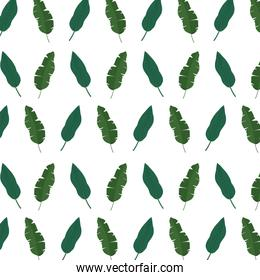 exotic leaf natural style background