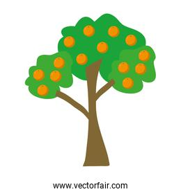 natural tree with delicious oranges fruits
