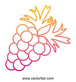 degraded line delicious cluster grapes fruits with leaves