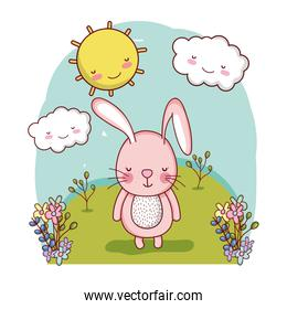 cute rabbit wild in the landscape with clouds